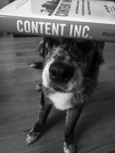 content marketing dogs